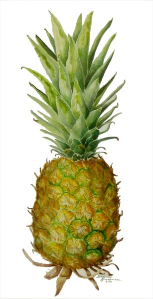 1920x12292015154515Kuuskmae__Suzanne__Ripe_Pineapple__watercolor