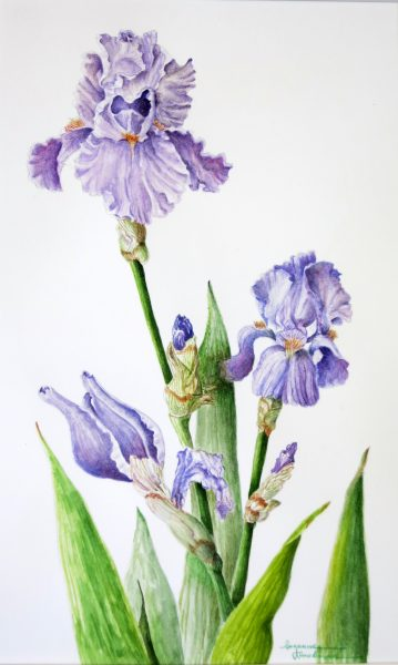 Kuuskmae,Suzanne, Iris, 16X14, $700